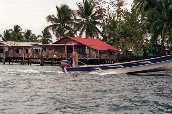 Emerald Monkey, Isla Pastor (Panamá)