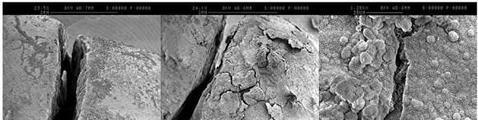 La bacteria se reproduce y sella las grietas - Universidad de Newcastle / NeoTeo / ABC.es
