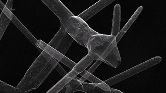 Imagen del nuevo material, el aerografito - Universidad Técnica de Hamburgo / Ciencia ABC.es